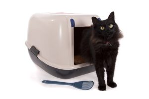 Cat Odour Removal Company
